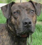 This girl is very sweet and fairly laid back. She's not sure how she ended up in the shelter but she would love a family to come make her part of their family.
